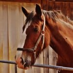 Common Equine Skin Conditions