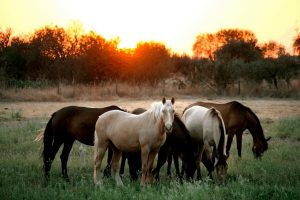 Deworming Schedules and Programs for Horses