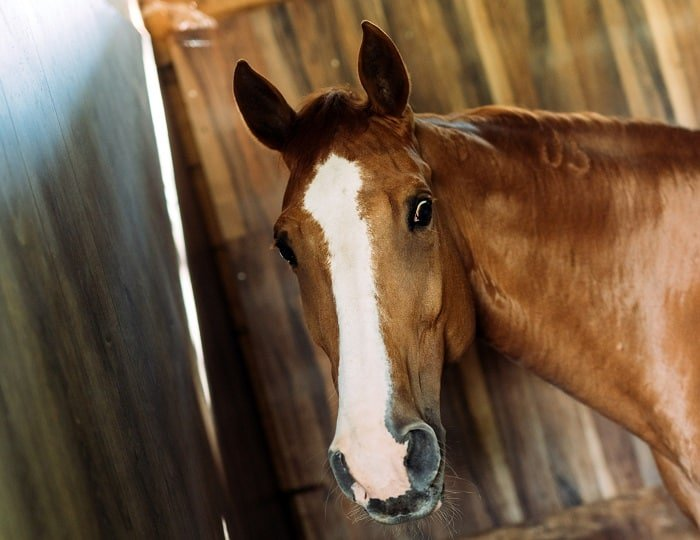 Rabies in Horses: Steps to Take