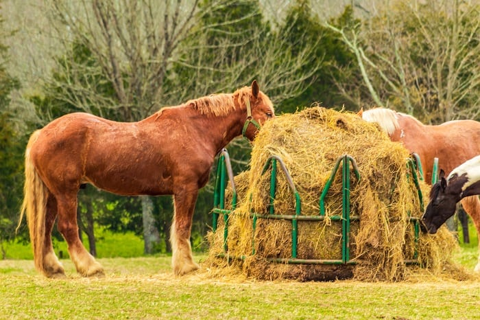 How Much Hay Does a Horse Eat, Size of Horse