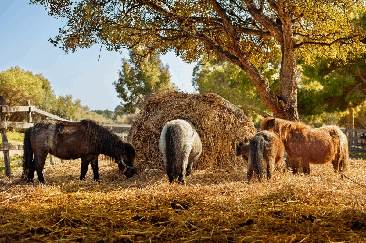 How Much Hay Should a Horse Eat Daily