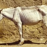 Signs Your Horse May Be Dying and What You Can Do To Help