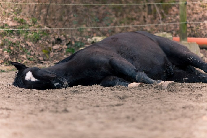 Signs a Horse is Dying: Reasons They May be Dying