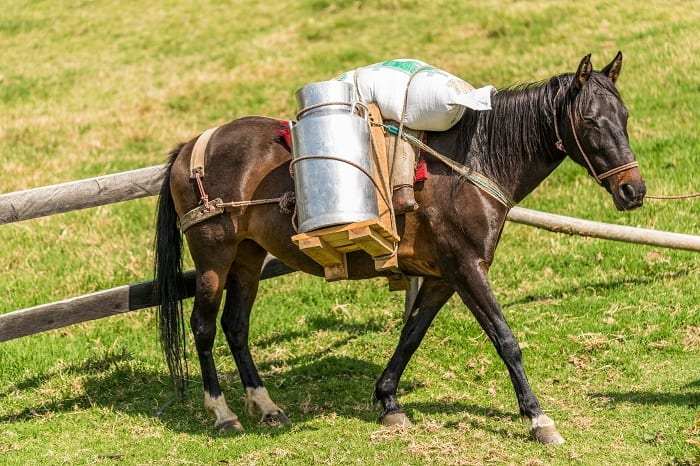 What Contributes to the Weight a Horse Carries?