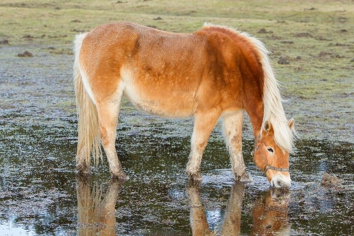 Treating Scratches in Horses: Can Scratches be Prevented?