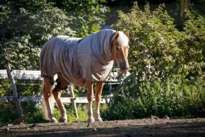 Turtleneck Horse Blankets