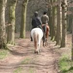 Bringing Your Horse Home. Can I Have a Horse on My Property?