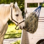 Chopped Hay for Senior Horses