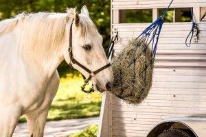 Chopped Hay for Senior Horses