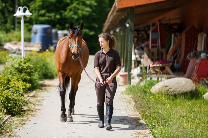 Navicular in Horses: Riding a Horse with Navicular