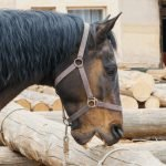 Stopping Cribbing: How to Stop Horses from Chewing Wood