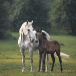 What is DSLD in Horses?