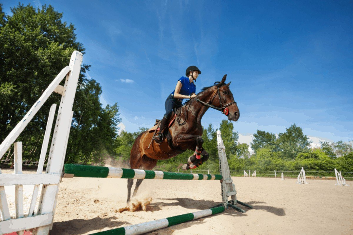 When is the Best Time to Train a Horse