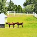 Everything About Run-In Sheds for Horses