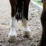 Best Hoof Supplements For Horses