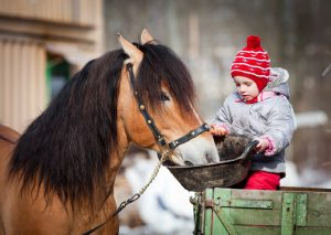 Everything About Sweet Feed for Horses