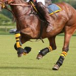 Best Fly Boots For Horses- Review