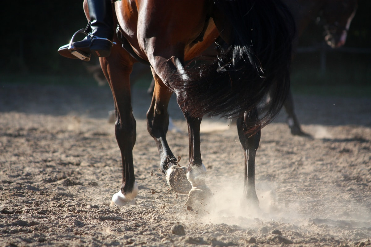 Tying-Up In Horses- Everything You Need To Know