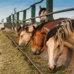 Types Of Hay For Horses