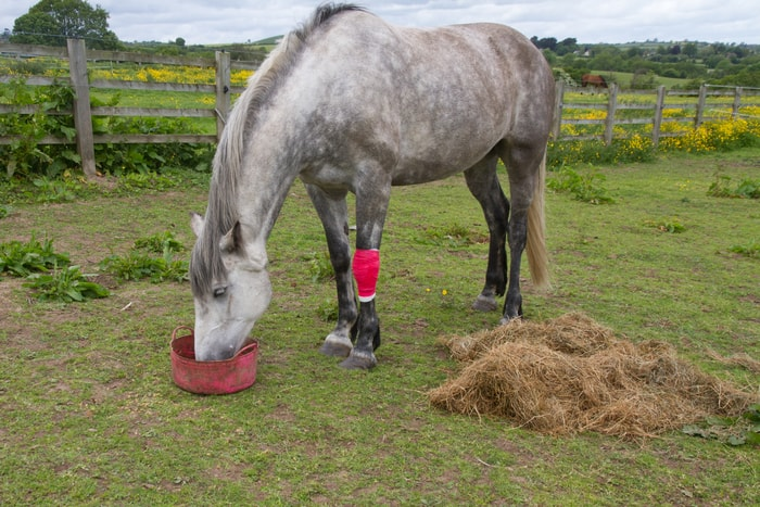 Why Feed Rice Bran to Horses