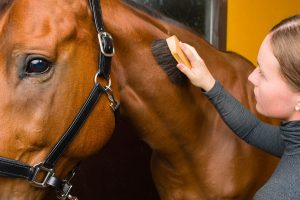 Best Horse Grooming Kit For An Effective Grooming