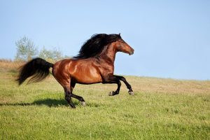 Best Muscle Builder For Horses