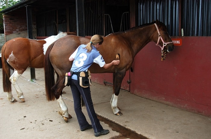 Horse Grooming - Human and Horse Relationship