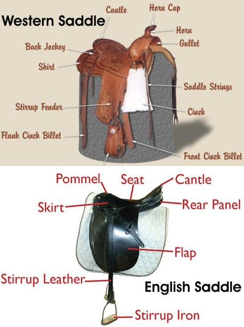 Parts of a Saddle - Western and English