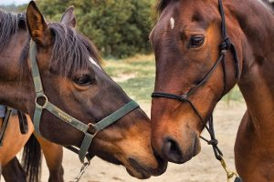 Breeding Season - Choosing The Right Month For Your Mare