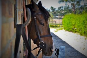 Can Humans Get Equine Infectious Anemia