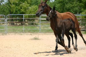 My Mare Foaled - How Soon Can You Get Back in the Saddle