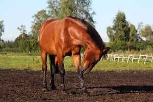 What Is The Best Treatment For Scratches In Horses