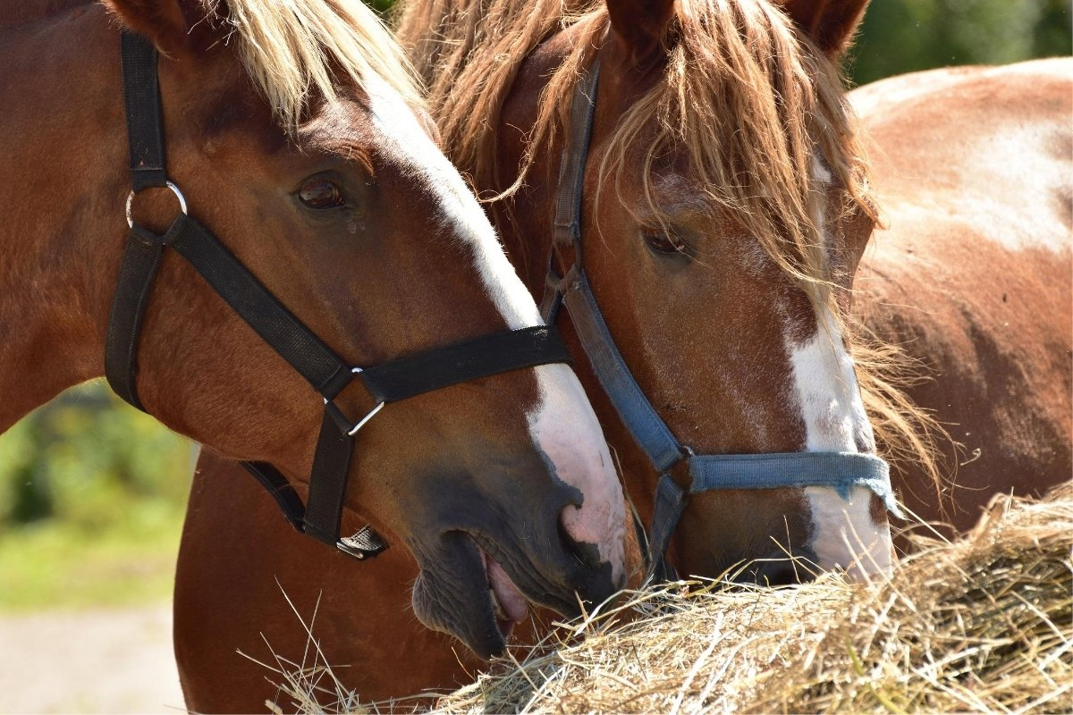 Best Hay For Horses With The Most Protein
