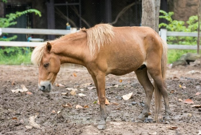 Coggins and Equine Infectious Anemia (EIA)