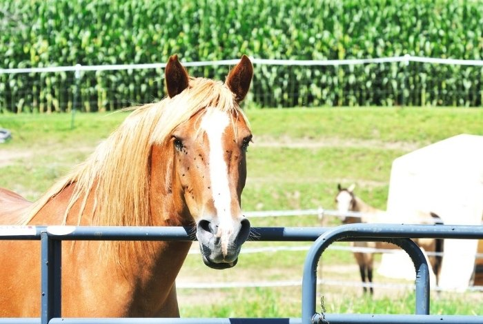 Fly Spray for Horses Options