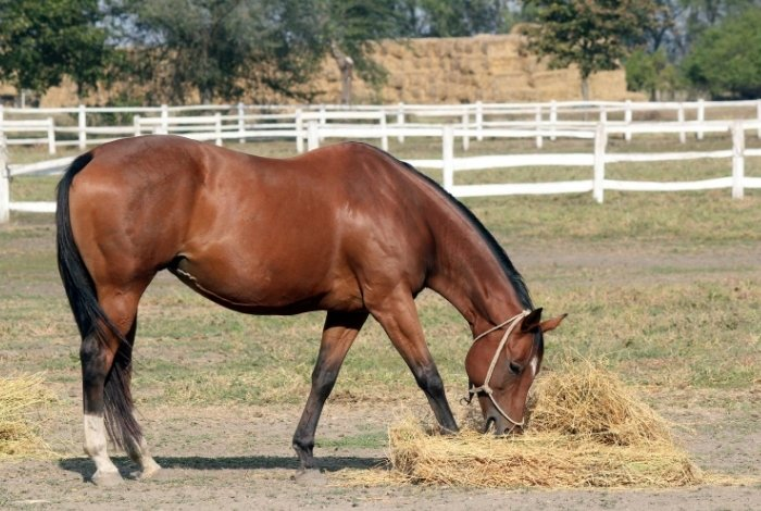 Protein Supplements for Horses