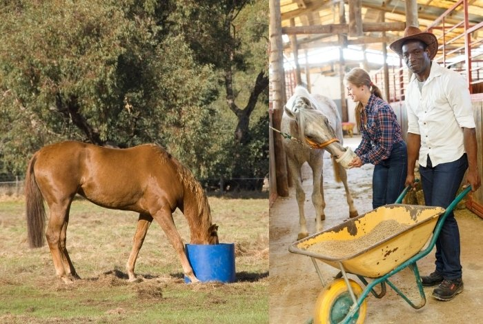 Role of Selenium in Horses