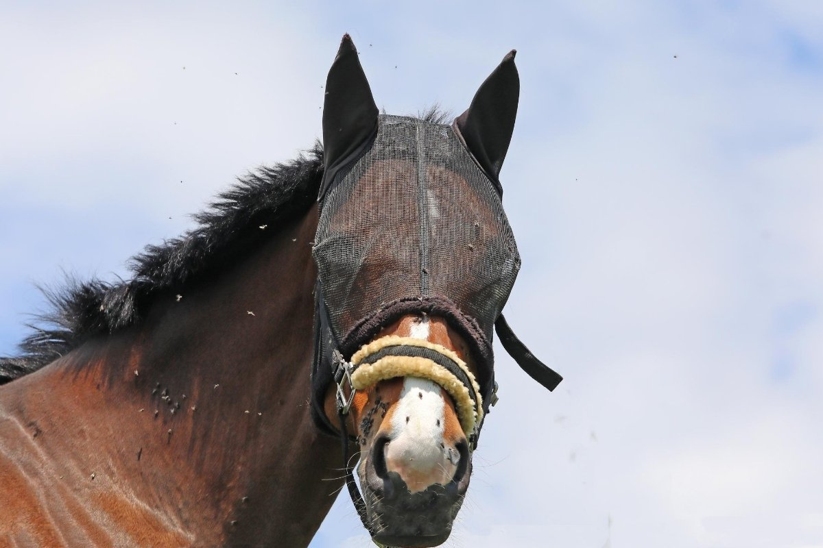 The Best Fly Spray For Horses