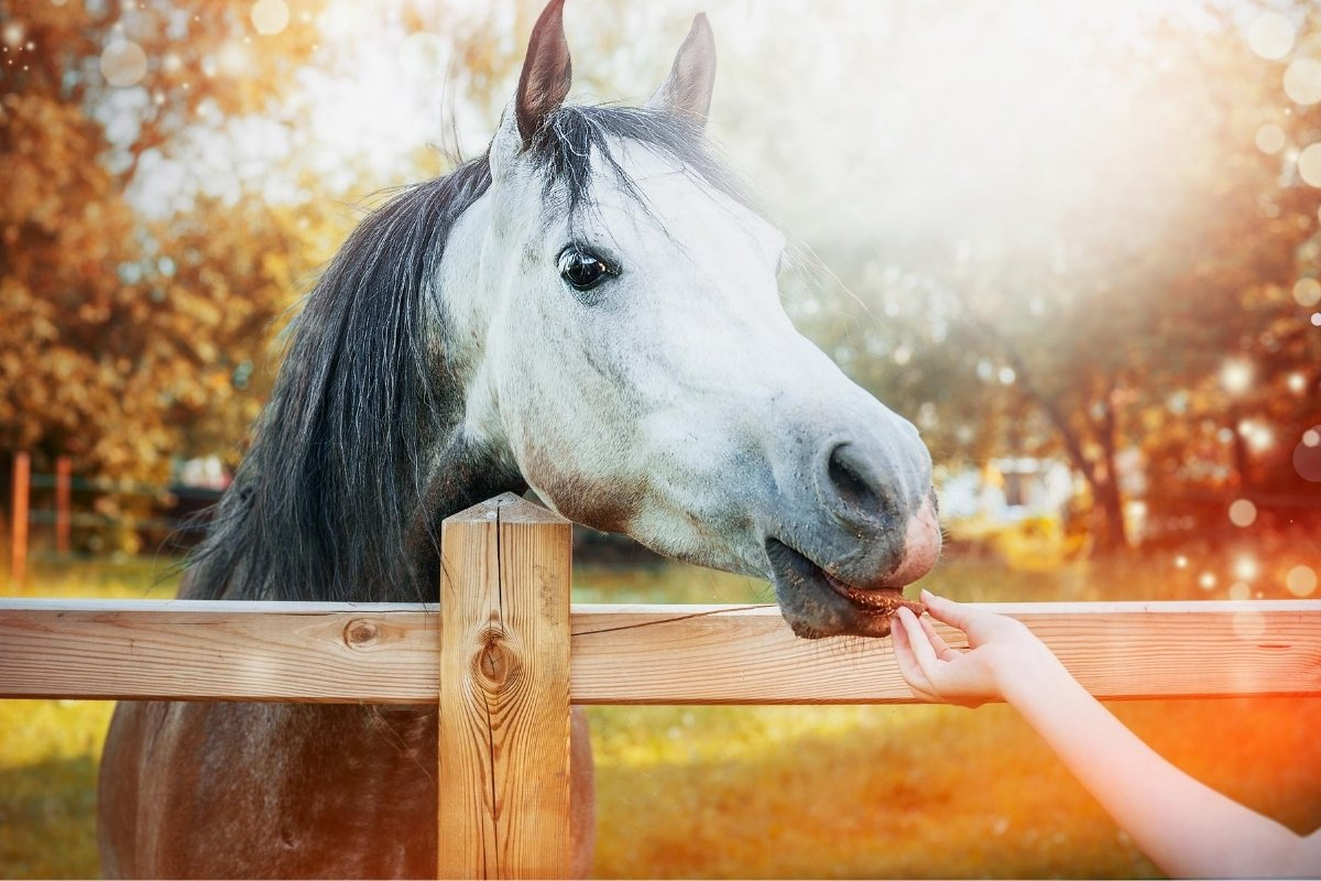 The Top 5 Best Treats for Horses