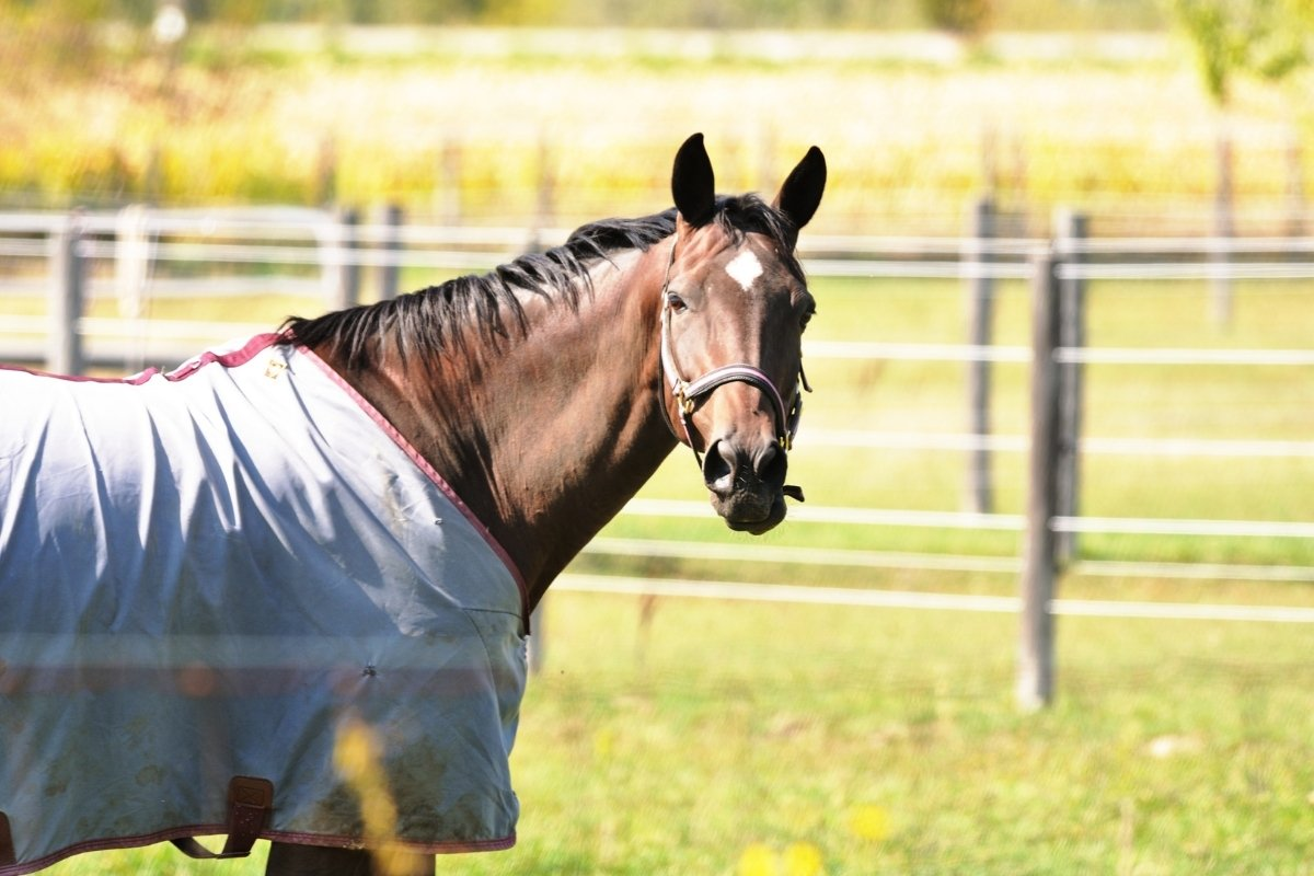 7 Best Fly Sheets For Horses