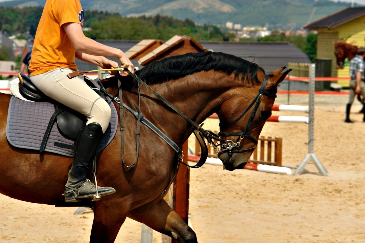 Can You Wear Leggings For Horseback Riding?
