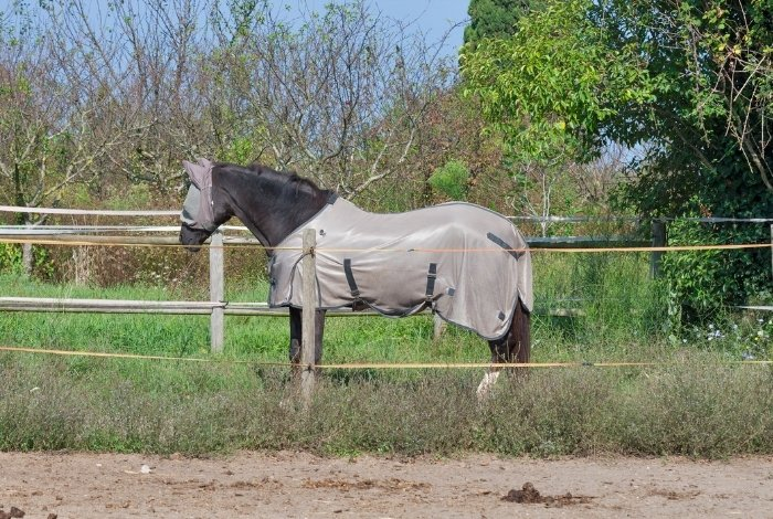 Fly Sheets For Horses - Price