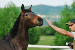 Signs Of Neurological Problems In Horses