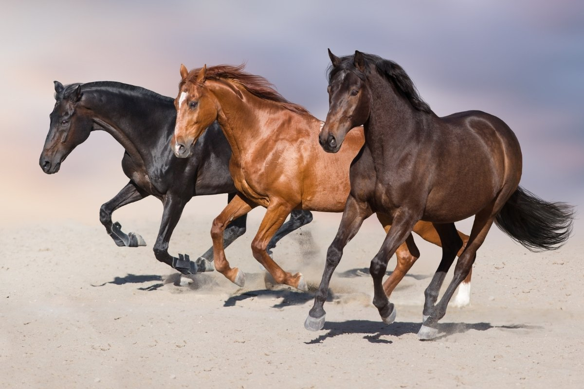 The Fastest Horse Breed & What Makes them Fast