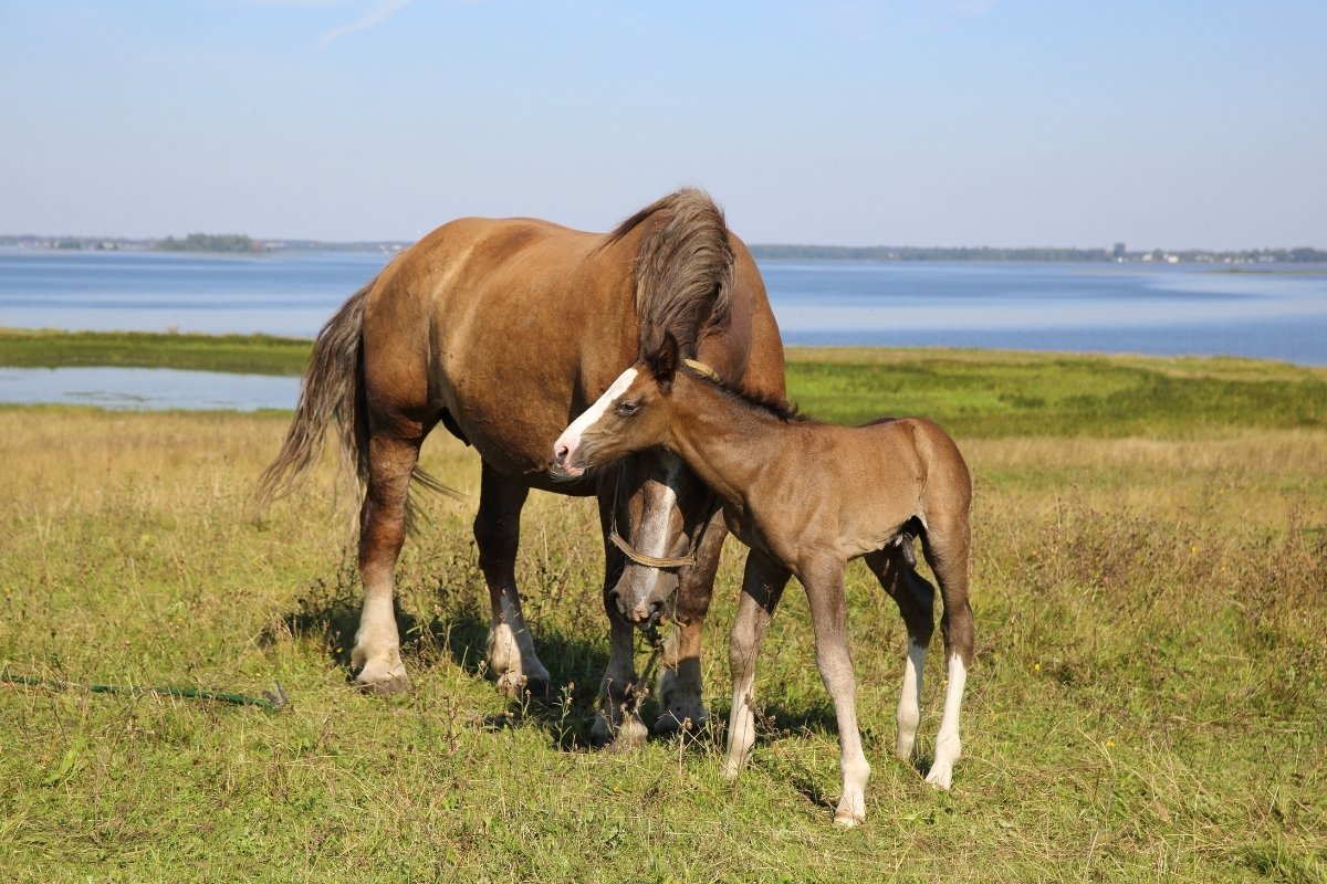 What Does Foaling Mean Signs & Stages