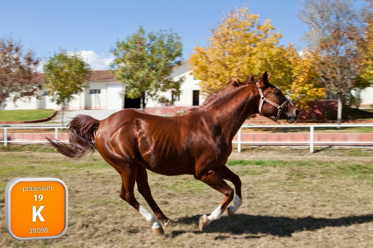 What Is HYPP In Horses - The Impressive Muscular Disease