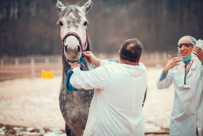 What Is a Sarcoid On a Horse?Cancer, Tumour, or Both