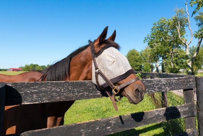 Features of The Best Fly Masks For Horses