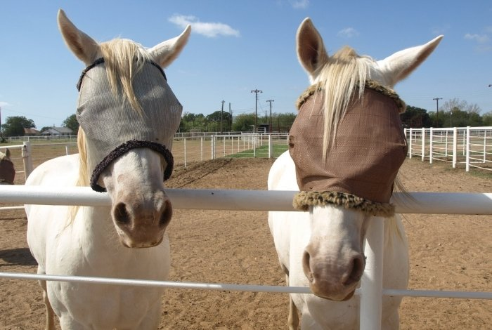 Purpose of Fly Masks