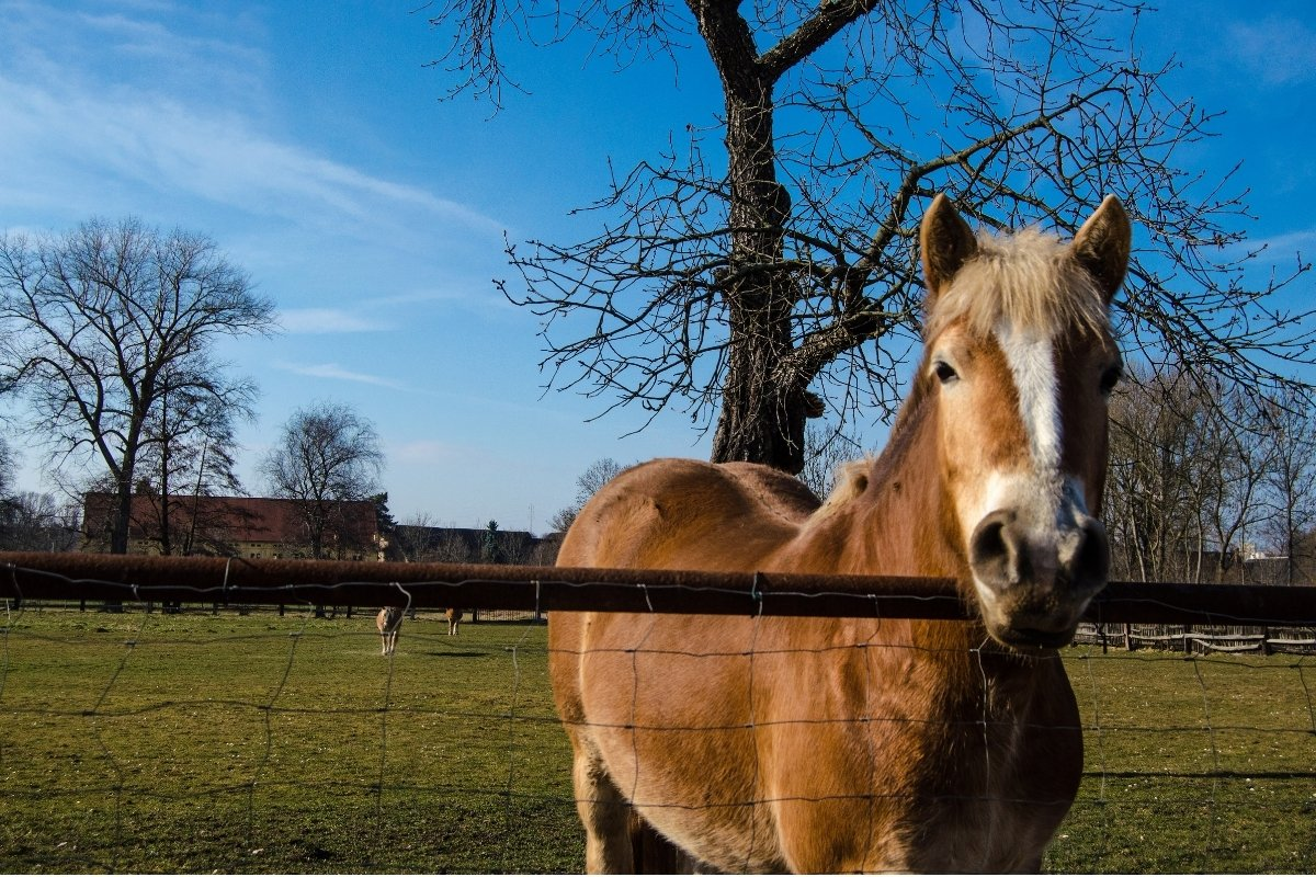 The Best Round Pen Size for Horses